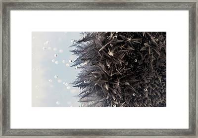 Zinc Reacting With Lead Nitrate Framed Print