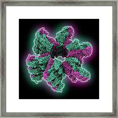 Zinc Transporter Yiip Molecule Framed Print by Laguna Design