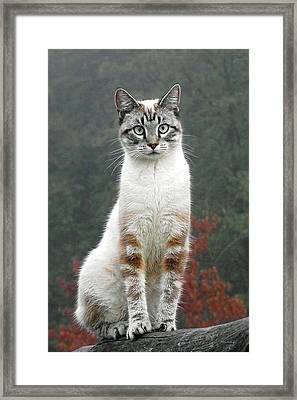 Zing The Cat Framed Print
