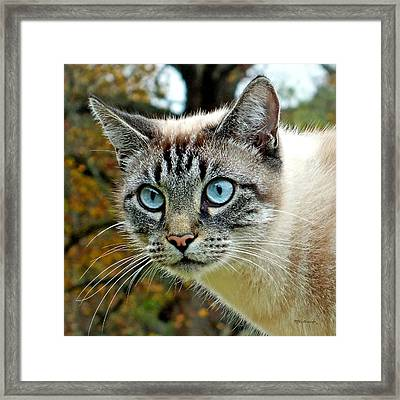 Zing The Cat Upclose Framed Print