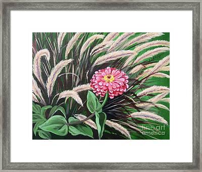 Zinnia Among The Grasses Framed Print