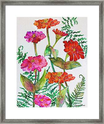 Zinnia And Ferns Framed Print by Janet Immordino