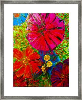 Zinnia Garden Framed Print by Anne Hamilton
