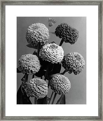 Zinnia Lilliput Flowers Framed Print