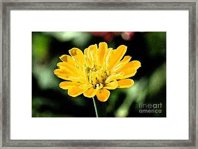 Zinnia Yellow Flower Floral Decor Macro Fresco Digital Art Framed Print by Shawn O'Brien