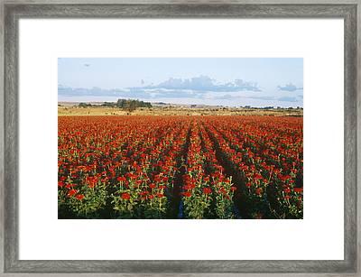 Zinnias Framed Print