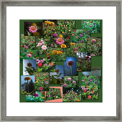 Zinnias Collage Square Framed Print by Thomas Woolworth
