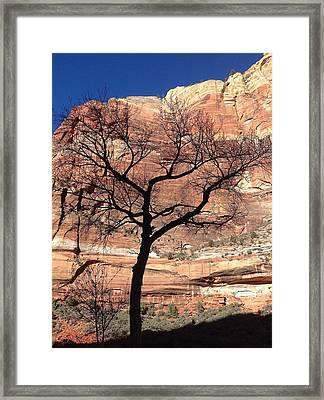 Zion Canyon Tree #2 Framed Print by Feva  Fotos