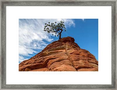 Zion Cypress Framed Print by John Daly