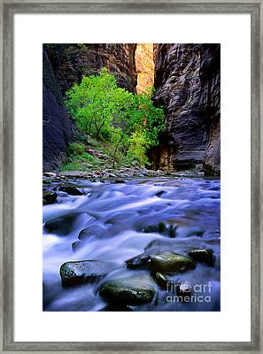 Zion Narrows Framed Print by Inge Johnsson
