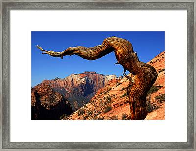 Zion's West Temple View Framed Print by Daniel Woodrum
