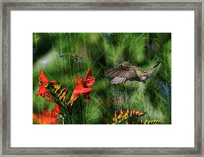 Zip-a-dee-doo-dah Framed Print by Donna Kennedy