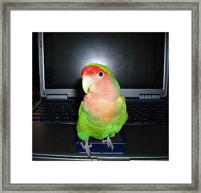Zippy The Lovebird Framed Print by Joan Reese
