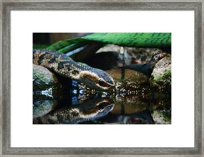 Framed Print featuring the photograph Zoo 039 by Andy Lawless