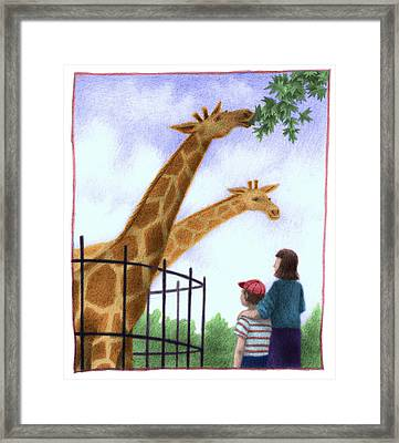 Zoo Giraffe Framed Print by Steve Dininno