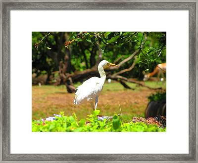 Zoo Framed Print by Oleg Zavarzin