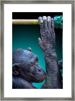 Zoo Subway Framed Print by Brian Stevens