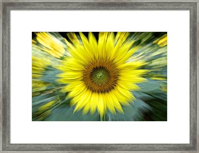 Zoom Sunflower Framed Print