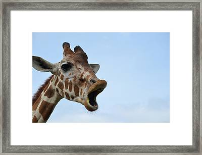 Zootography Giraffe Honking Framed Print by Jeff at JSJ Photography