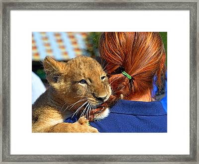 Zootography3 Zion The Lion Cub Likes Redheads Framed Print by Jeff at JSJ Photography