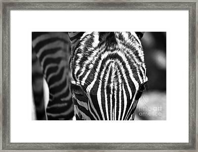 Zori  Framed Print by Juls Adams