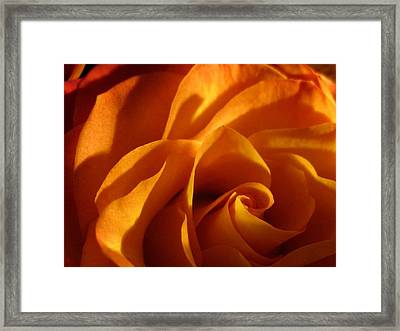 Zowie Rose Framed Print
