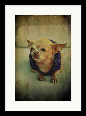 Doggy Sweaters Framed Prints