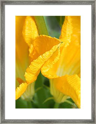 Zucchini Flowers In May Framed Print