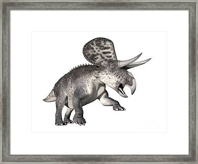 Zuniceratops Dinosaur, White Background Framed Print by Elena Duvernay
