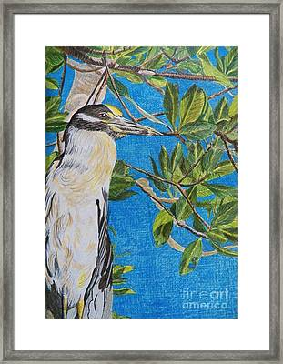 Yellow Crested Night Heron Painting Framed Print by Judy Via-Wolff