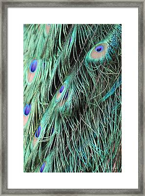 Framed Print featuring the photograph  A Waterfall Of Feathers  by Amy Gallagher