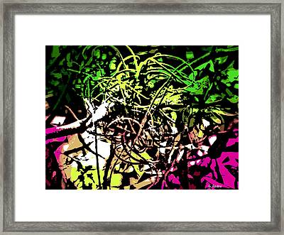 Air Plant Framed Print by George Pedro