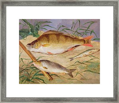 An Angler's Catch Of Coarse Fish Framed Print by D Wolstenholme