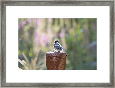 Bird Bathing In My Fountain 2 Framed Print by Michel DesRoches