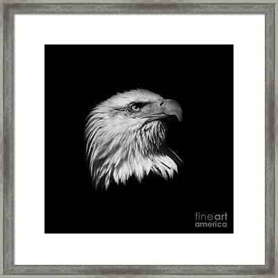 Black And White American Eagle Framed Print