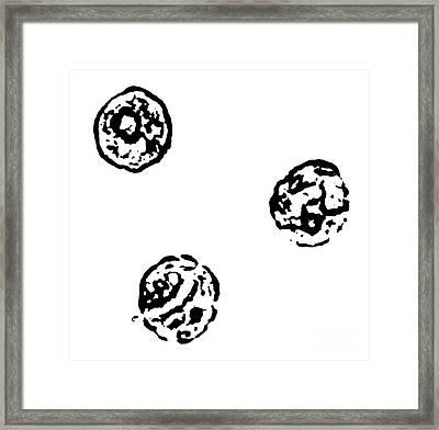 Black And White No.33 Framed Print by Drinka Mercep