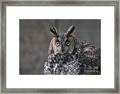 Blink Framed Print by Suzanne Handel