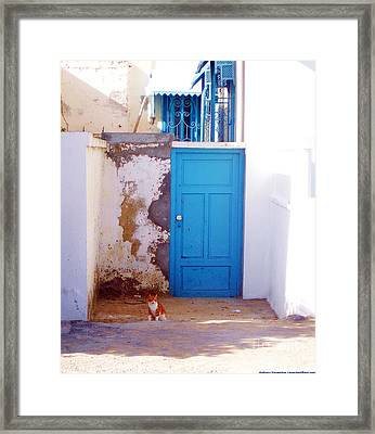 Blue Door Cat Framed Print by Anthony Novembre