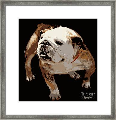 Framed Print featuring the photograph  Bulldog  by Mindy Bench