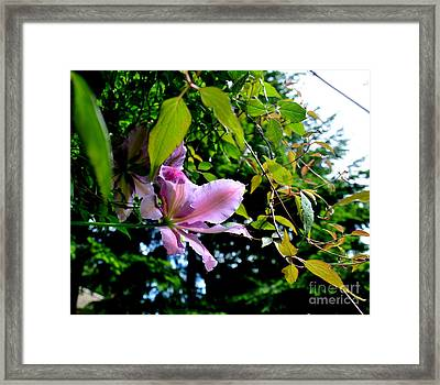Framed Print featuring the photograph  Clematis Flower by Tanya  Searcy