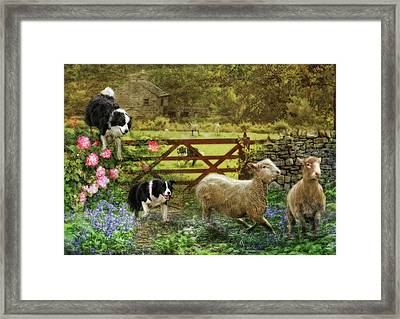 Collecting The Strays Framed Print by Trudi Simmonds