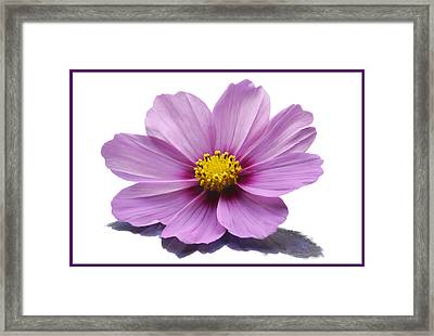 Cosmos Portrait. Framed Print by Terence Davis