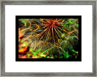 Framed Print featuring the photograph  Dandelion Dreamtime by Susanne Still