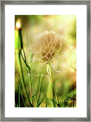 Dandelion Flower Framed Print by Margaret Buchanan