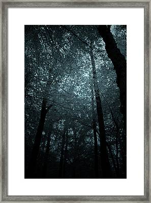 Dark Forest Silhouetted Against Sky Framed Print