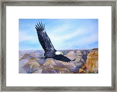 Eagle   American Bald Eagle Framed Print