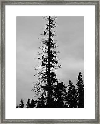 Eagle Silhouette - Bw Framed Print