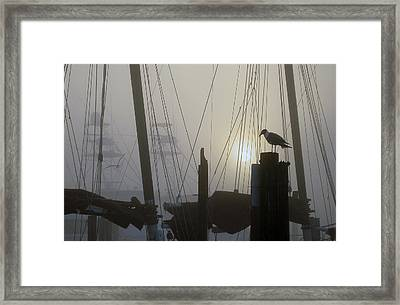 Early Morning At The Boat Docks Framed Print