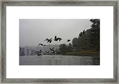 Fall Migration Lake Cd'a Idaho Framed Print by Grover Woessner