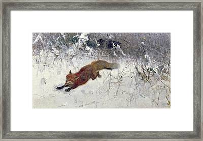 Fox Being Chased Through The Snow  Framed Print by Bruno Andreas Liljefors